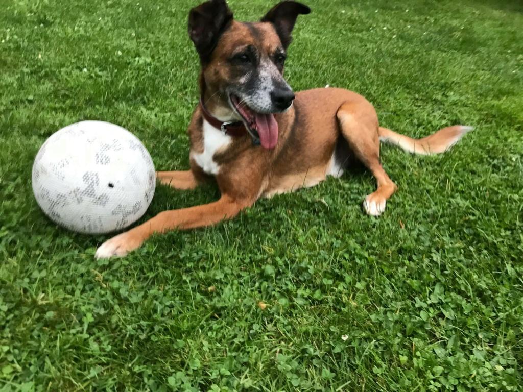 PAGNOL, chien de 7 ans environ pour 20 kg - Marrainé par Pat84 24240811