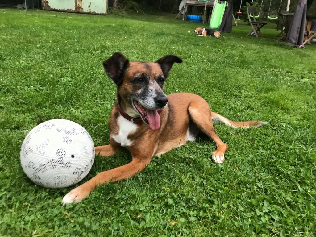 PAGNOL, chien de 7 ans environ pour 20 kg - Marrainé par Pat84 24241110