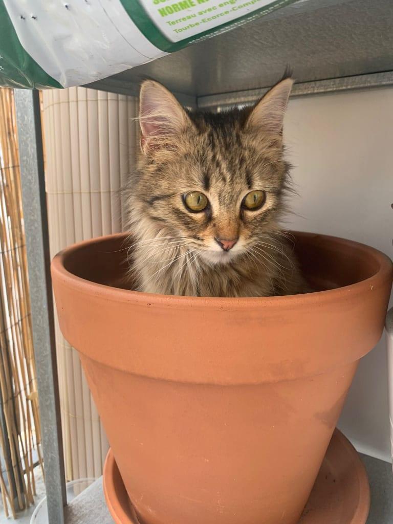 GISELE (Minicat) 24247110