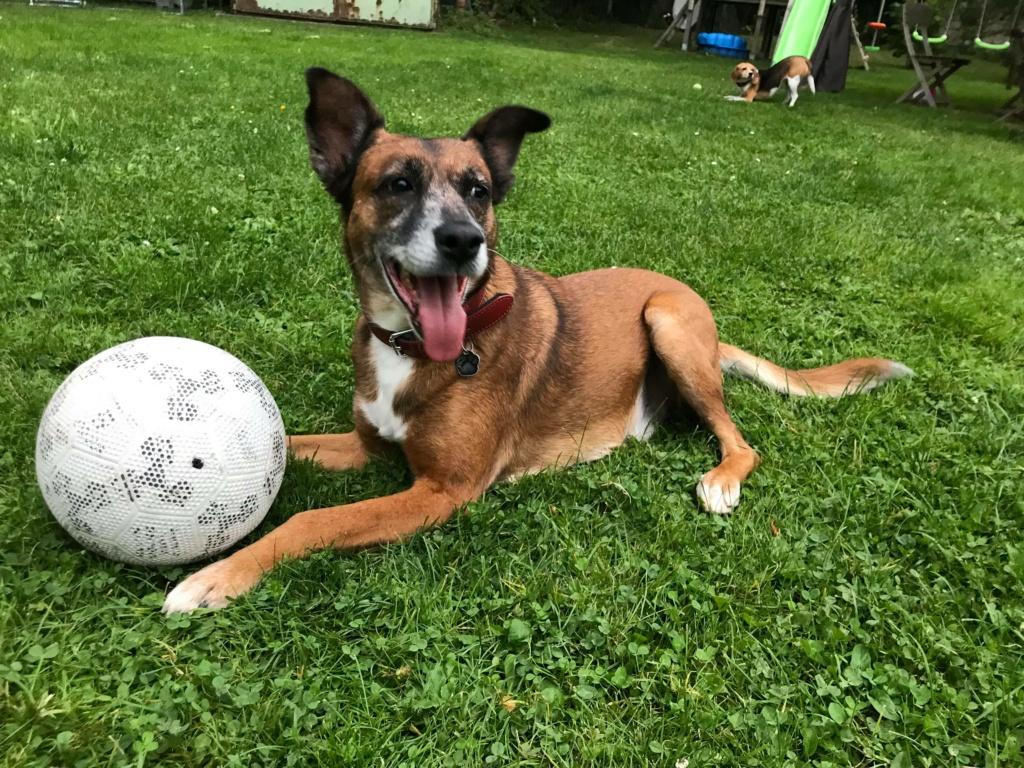 PAGNOL, chien de 7 ans environ pour 20 kg - Marrainé par Pat84 24260311