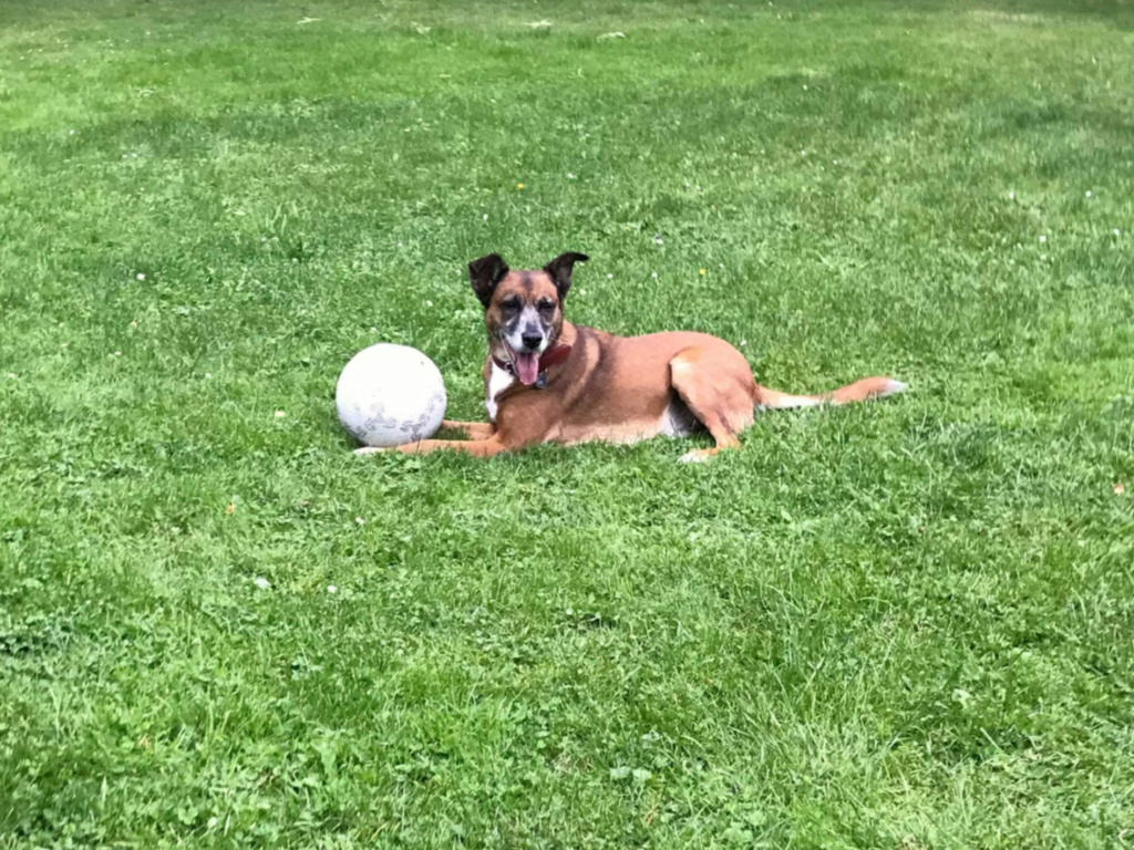 PAGNOL, chien de 7 ans environ pour 20 kg - Marrainé par Pat84 24273010