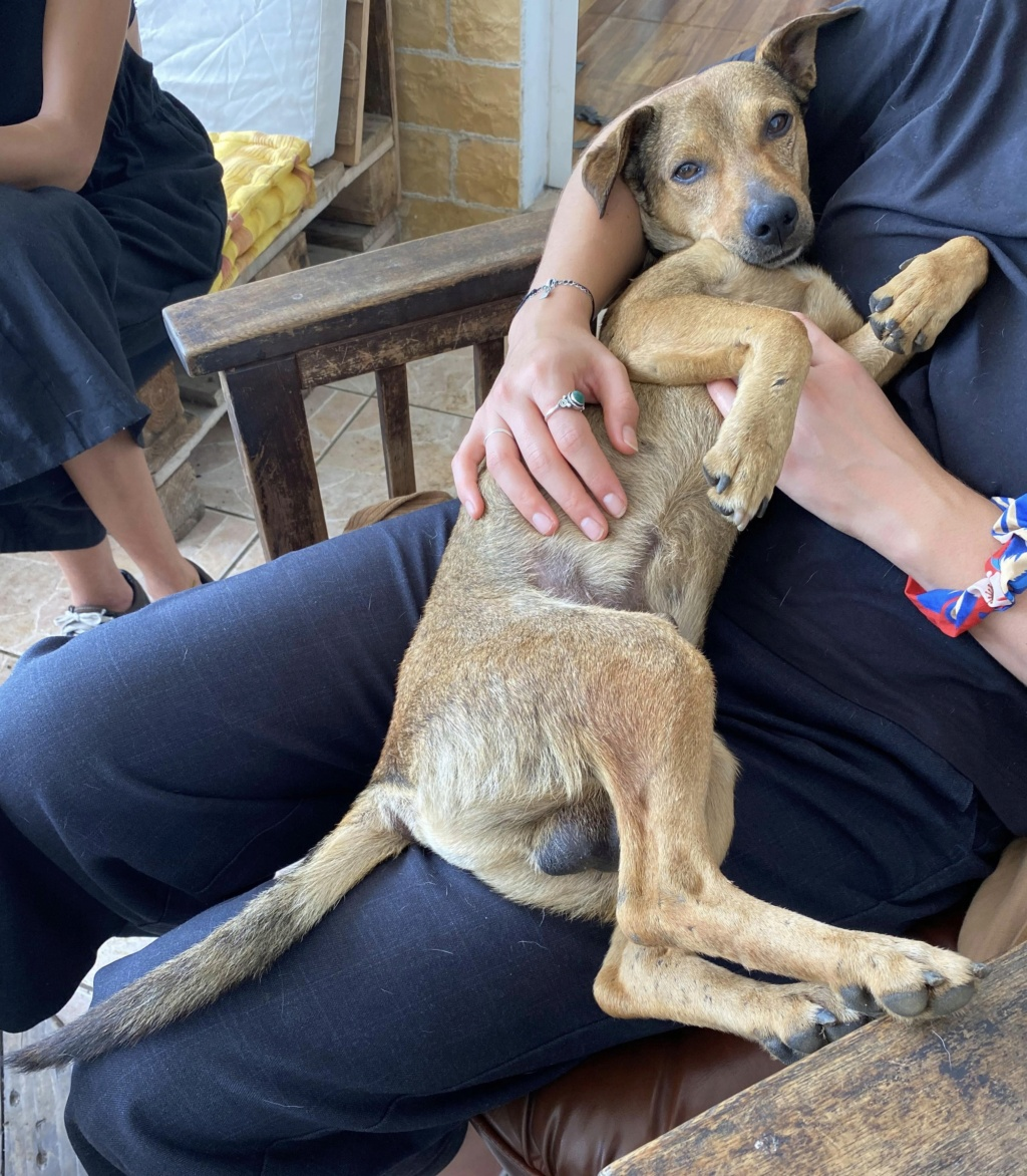 MAHY, jeune chien fauve charbonné de 1,5 an - 9,3Kg - Actuellement en soins - Marrainée par Muriel  468e6a10