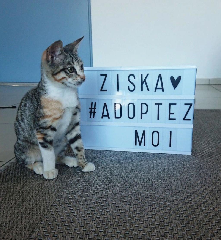 ZISKA et SARABI 79016710