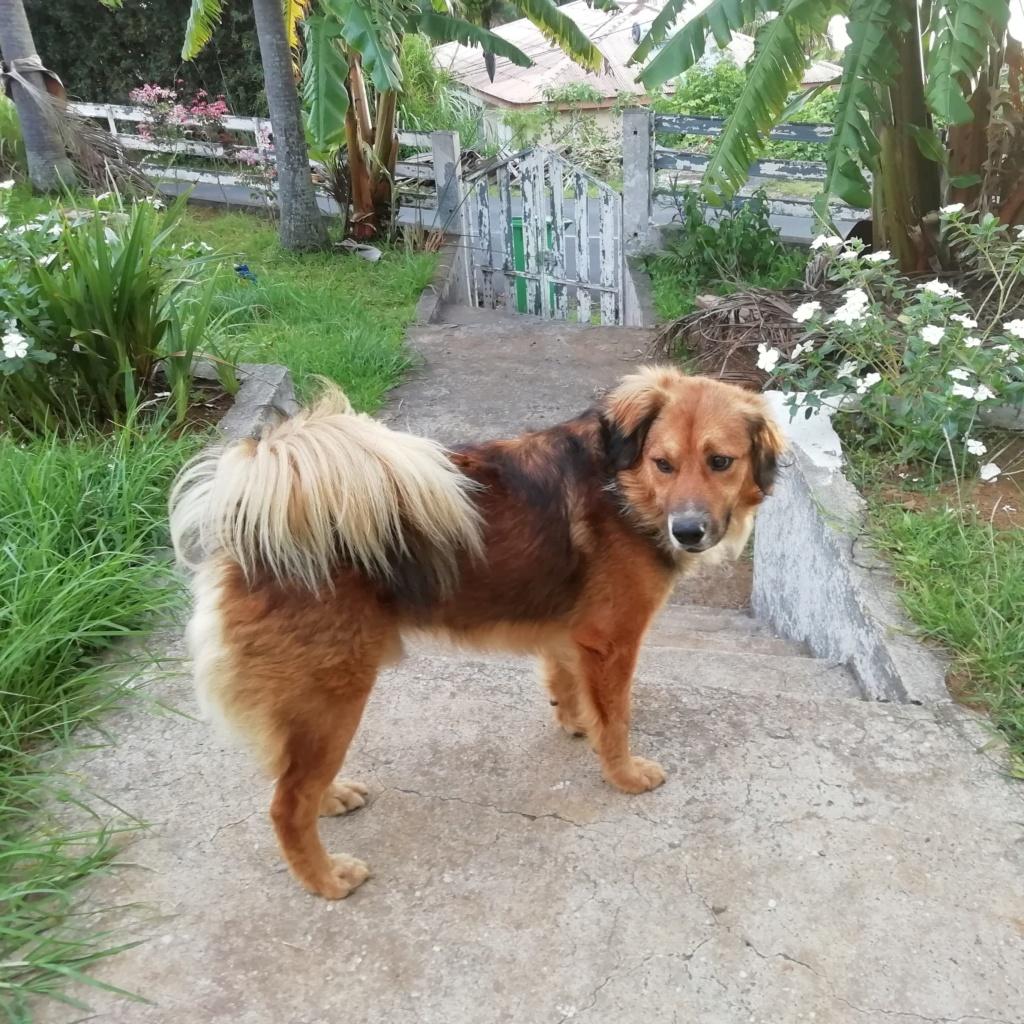 PUNCHY - chien mâle de 1 an - marrainé par Patricia - en observation chez Alpha Dog's House 81399911