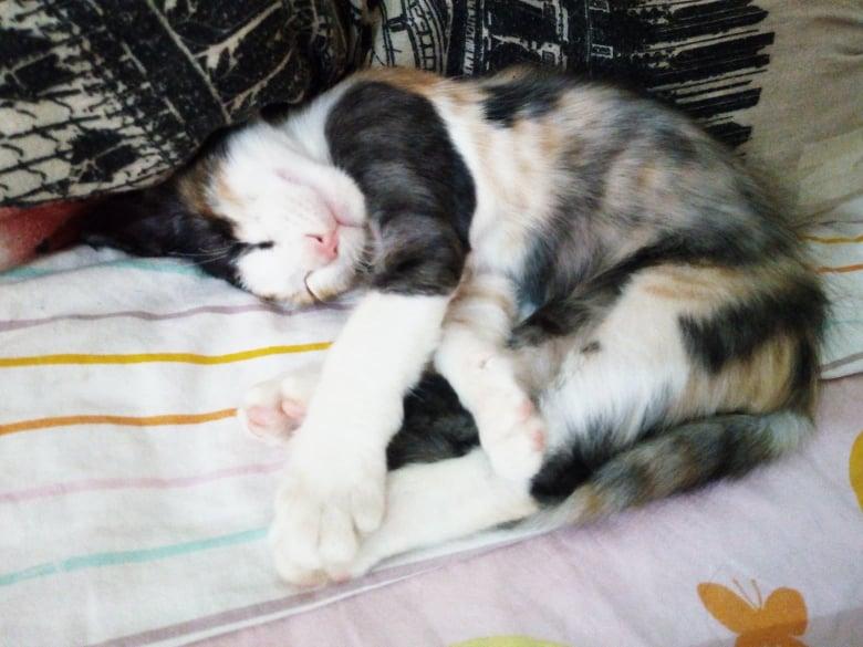 AMBRE, chatonne tricolore borgne de 3 mois - réservée par Natalia et sa famille 89840210