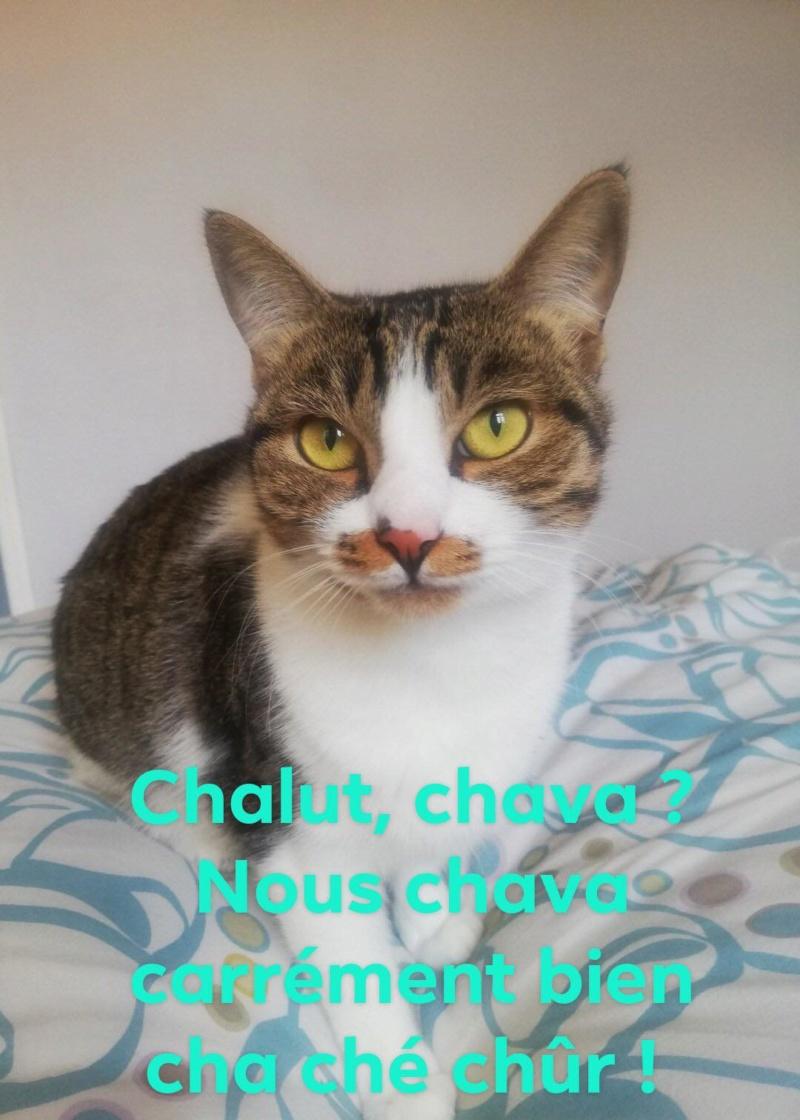 CHAKRA (Métisse) 92357210