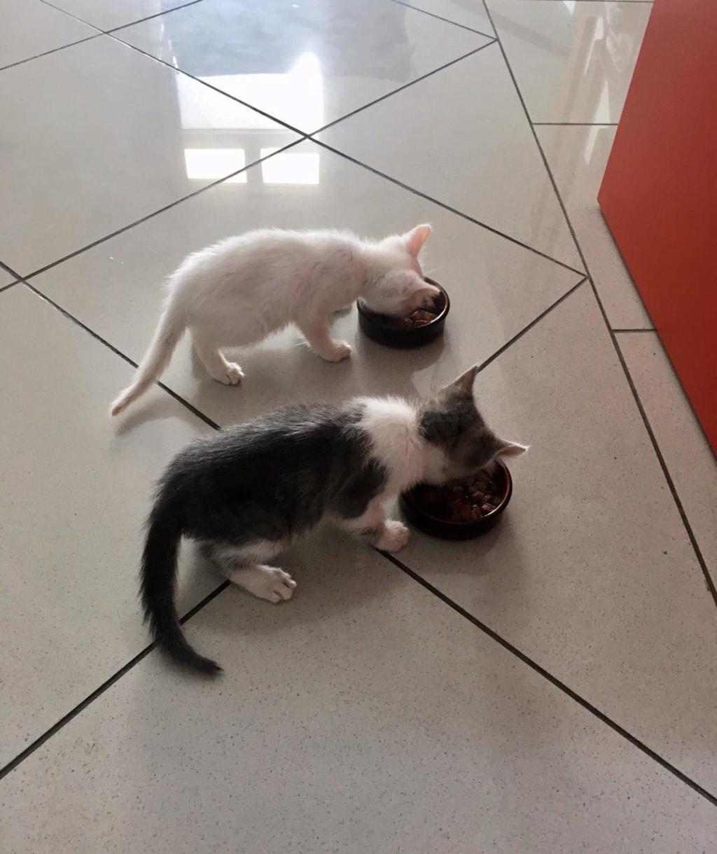 CYRION, LATTE (Mozza) et FUWA (Luigi) Aaaaa12