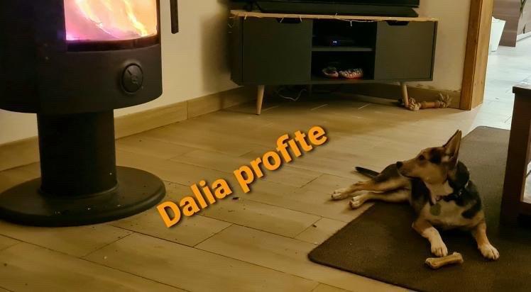 DALIA Dalia_32