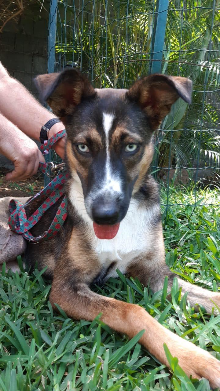 LAGOON, jeune chienne femelle d'environ 7 mois - Marrainée par Pat84 - Réservée par Karine Duches10