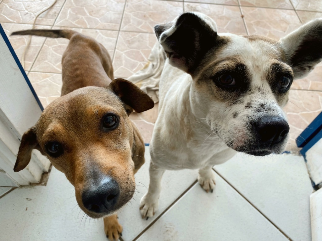MAHY, jeune chien fauve charbonné de 1,5 an - 9,3Kg - Actuellement en soins - Marrainée par Muriel  F0702110