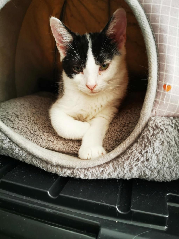 FLECHE, chatonne noire et blanche de 3 mois Fleche10