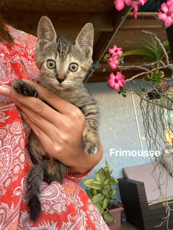 FRIMOUSSE Frimou10