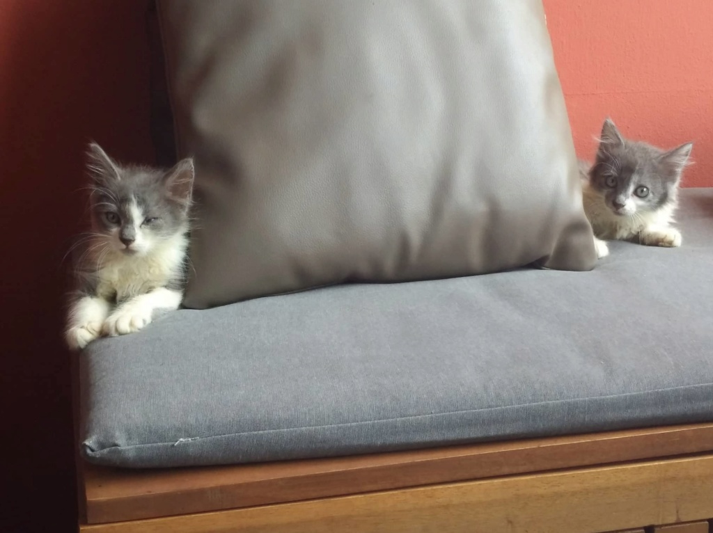 CHAMALLOW (Gaston) et CHATOUILLE (Kitty) Gaston14