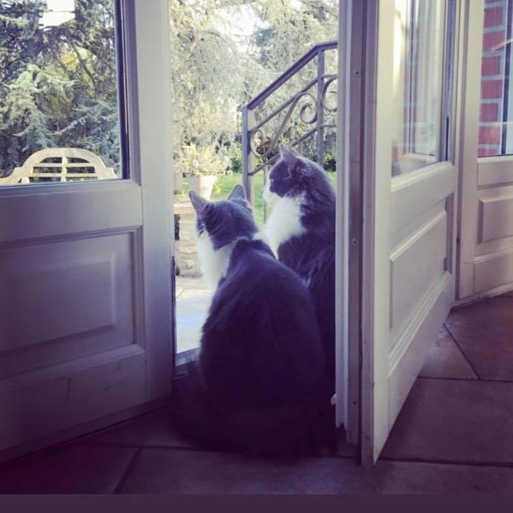 CHAMALLOW (Gaston) et CHATOUILLE (Kitty) Gki10
