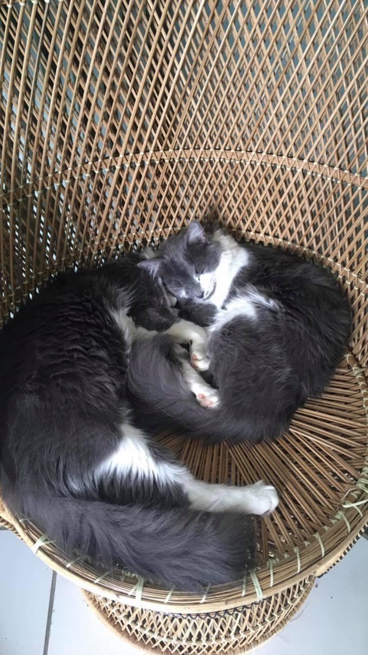 CHAMALLOW (Gaston) et CHATOUILLE (Kitty) Gkii10