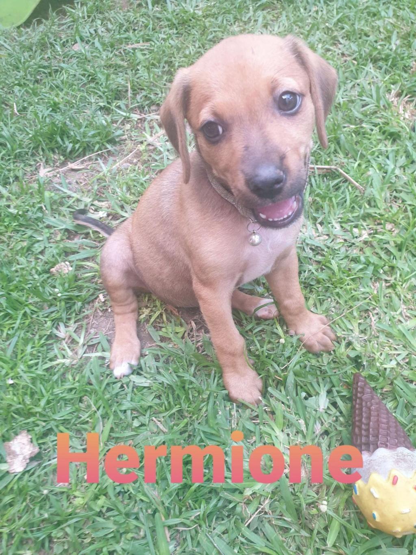 TAURIEL (Hermione) Hermio12