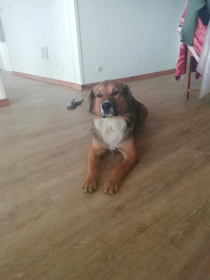 PUNCHY - chien mâle de 1 an - marrainé par Patricia - en observation chez Alpha Dog's House Img-4017