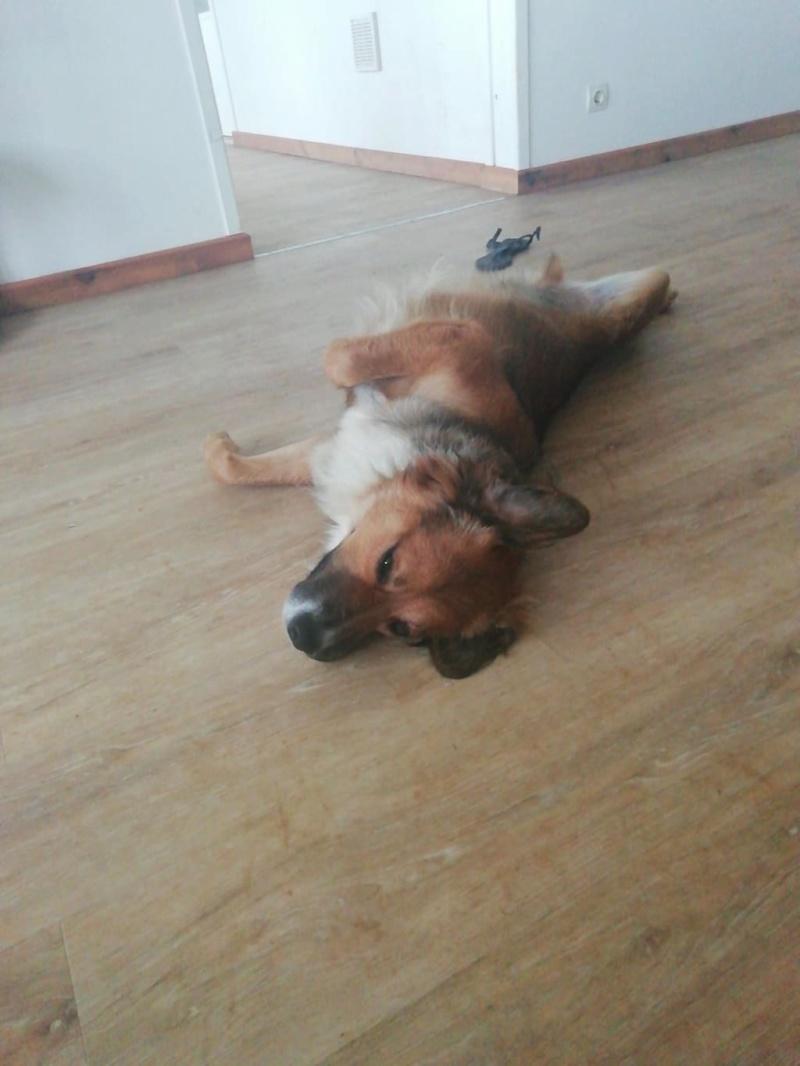 PUNCHY - chien mâle de 1 an - marrainé par Patricia - en observation chez Alpha Dog's House Img-4018