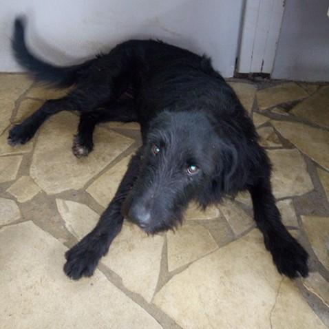 CHOCO, adorable chienne de 2 ans et demi - 28 kg - marrainée par Harfeng - Réservée par Anne Img_2036