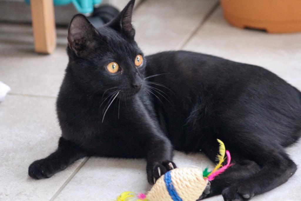JOHNSON, chaton de 5 mois - marrainé par Maudl - réservé par Tiphaine et Victor Img_7311