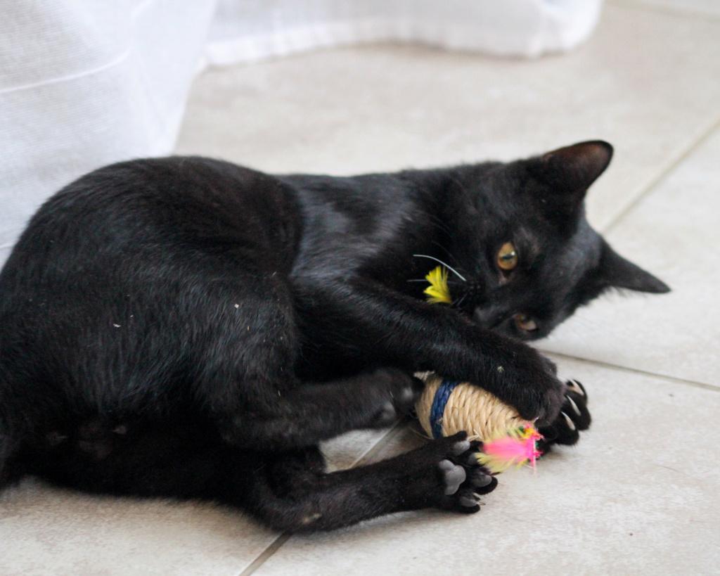 JOHNSON, chaton de 5 mois - marrainé par Maudl - réservé par Tiphaine et Victor Img_7313