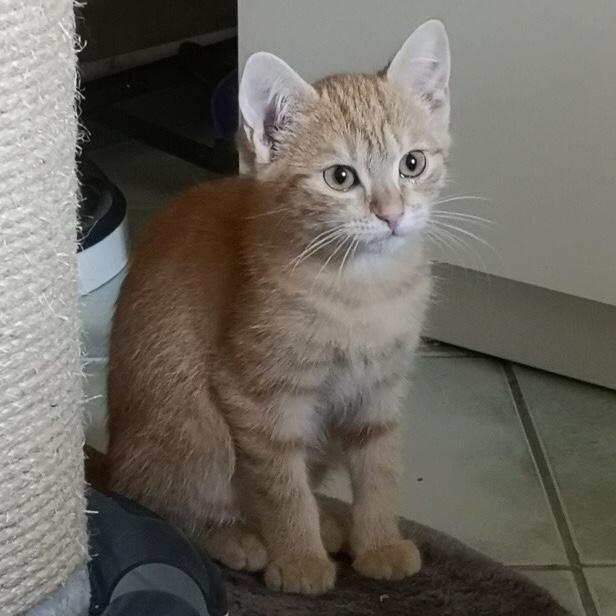OEN, chaton roux de 3 mois - marrainé par Mahé Img_8815