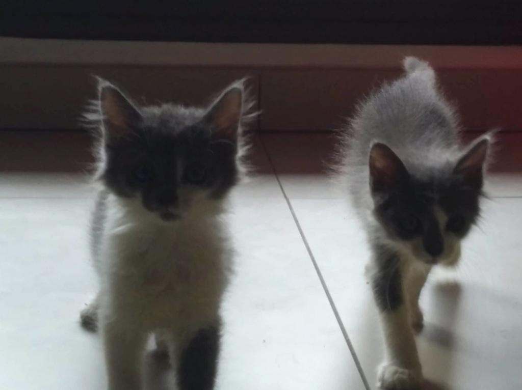 CHAMALLOW (Gaston) et CHATOUILLE (Kitty) Kitty_11