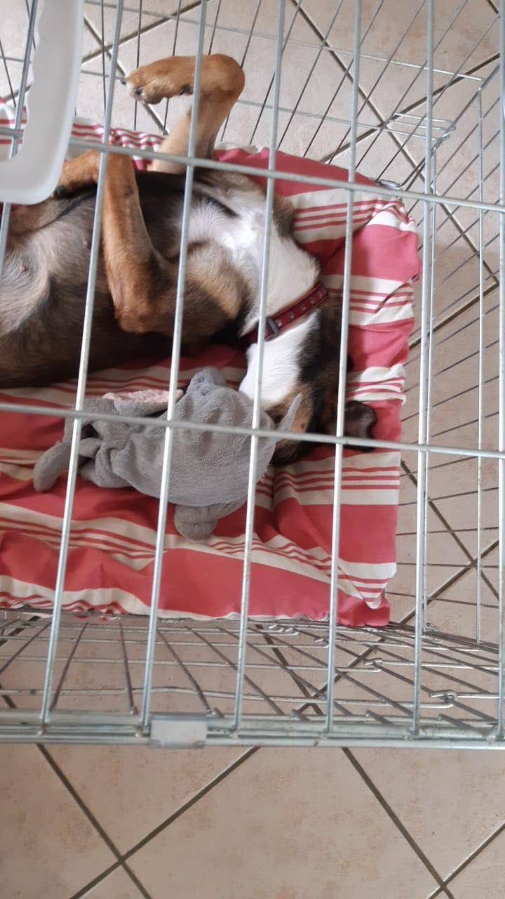 LAGOON, jeune chienne femelle d'environ 7 mois - Marrainée par Pat84 - Réservée par Karine Lagoon11