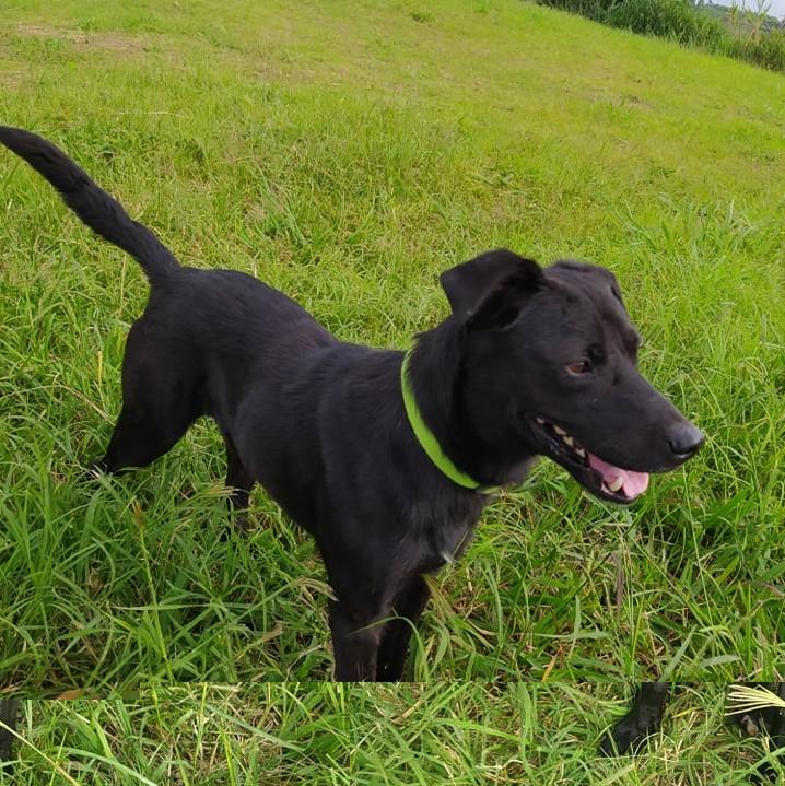 MALOSI, chien mâle noir de 4 ans environ pour 15 Kg Malosi13