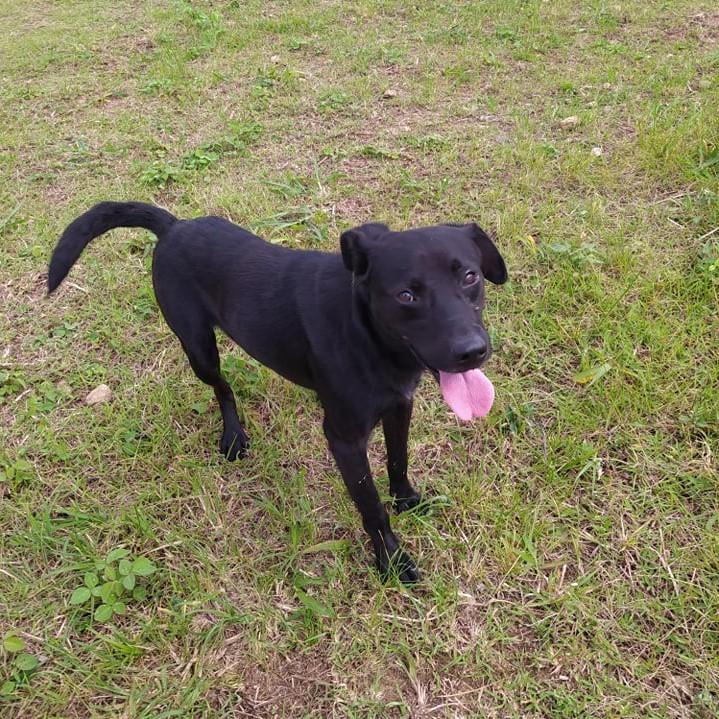 MALOSI, chien mâle noir de 4 ans environ pour 15 Kg Malosi14