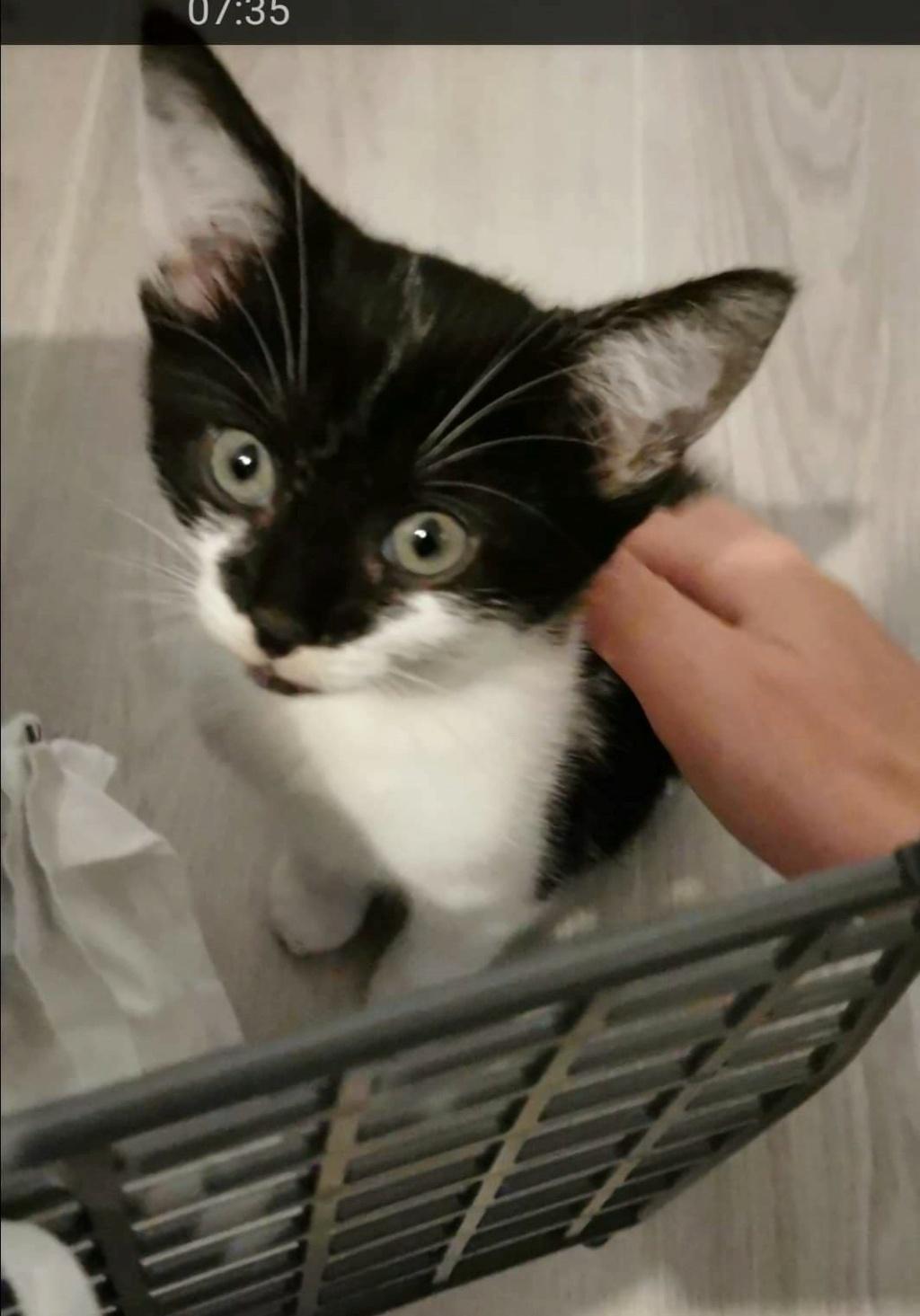 VIOLETTE, chatonne noire et blanche de 3 mois-Réservée par Sophie et sa famille Maman_13