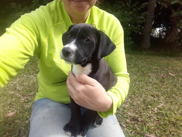 OFI, Chiot mâle noir et blanc de 2 mois pour 4,3 Kg- Réservé par Emmanuelle et Frédéric Ofi210