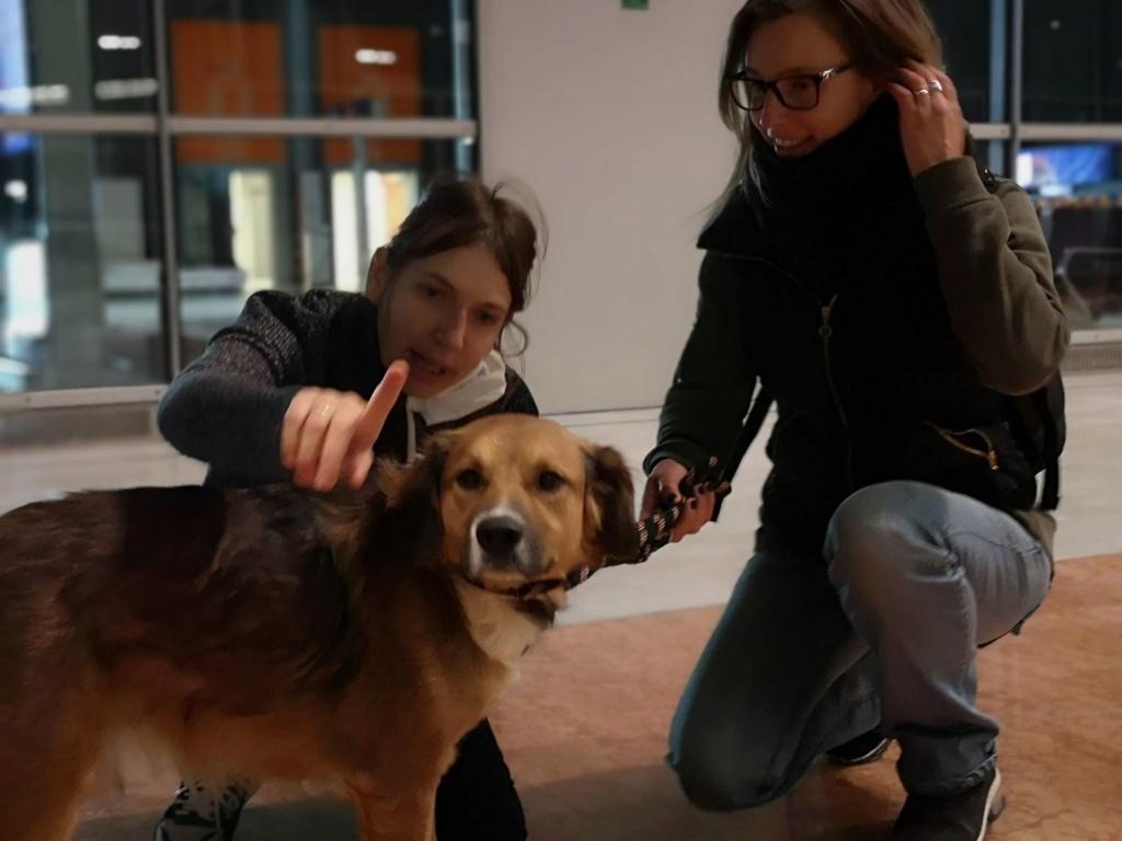 PUNCHY - chien mâle de 1 an - marrainé par Patricia - en observation chez Alpha Dog's House P112