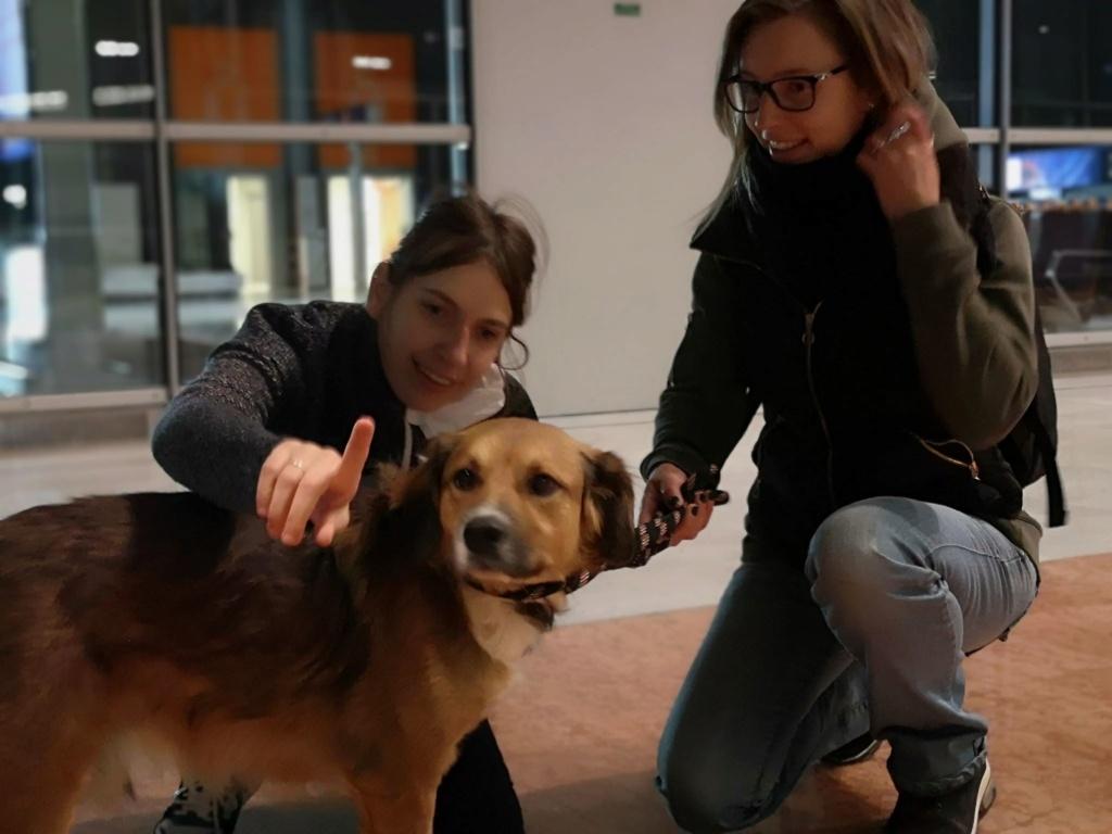 PUNCHY - chien mâle de 1 an - marrainé par Patricia - en observation chez Alpha Dog's House P412