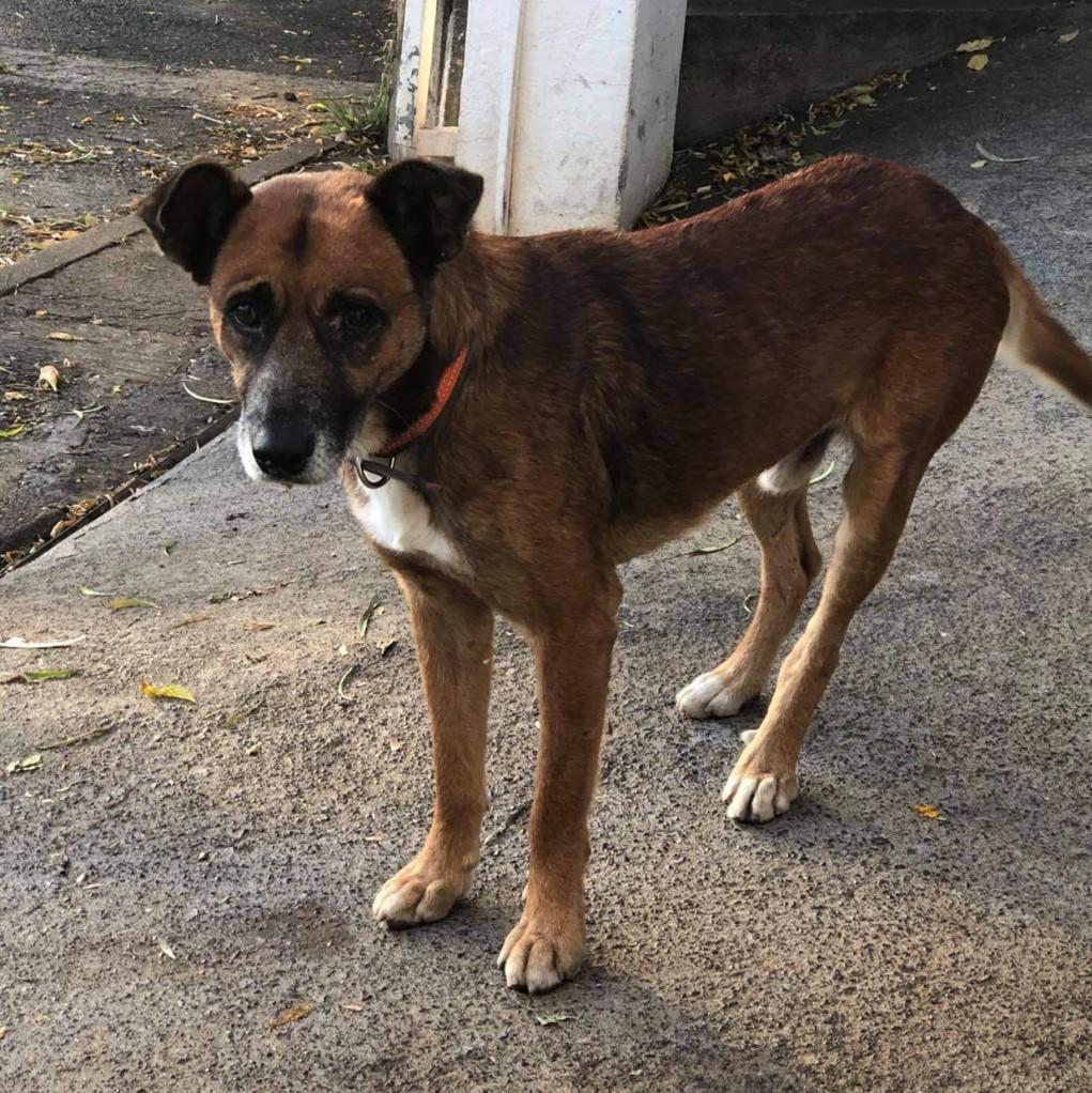 PAGNOL, chien de 7 ans environ pour 20 kg - Marrainé par Pat84 Pagnol15
