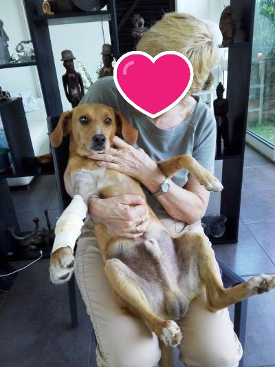 POMPOM, chien d'environ 4 ans pour 10 kg Pompom10