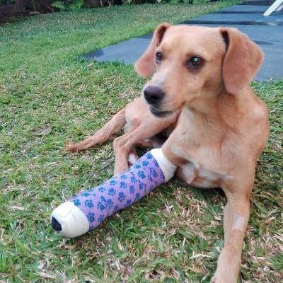 POMPOM, chien d'environ 4 ans pour 10 kg Pompom14