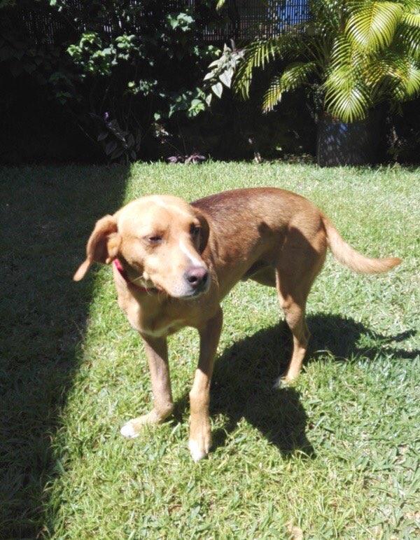 POMPOM, chien d'environ 4 ans pour 10 kg Pompom18