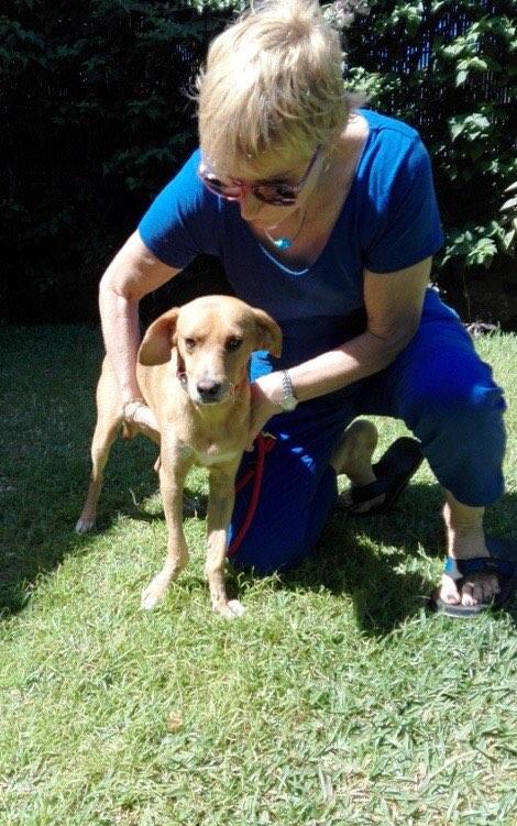 POMPOM, chien d'environ 4 ans pour 10 kg Pompom22
