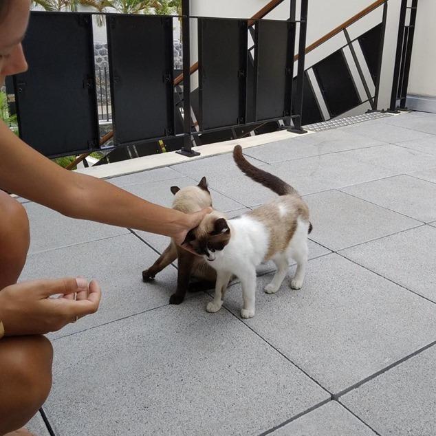 SOS pour ces deux magnifiques chats Sos_110