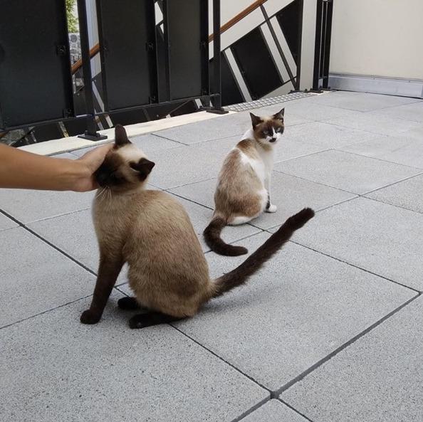 SOS pour ces deux magnifiques chats Sos_210