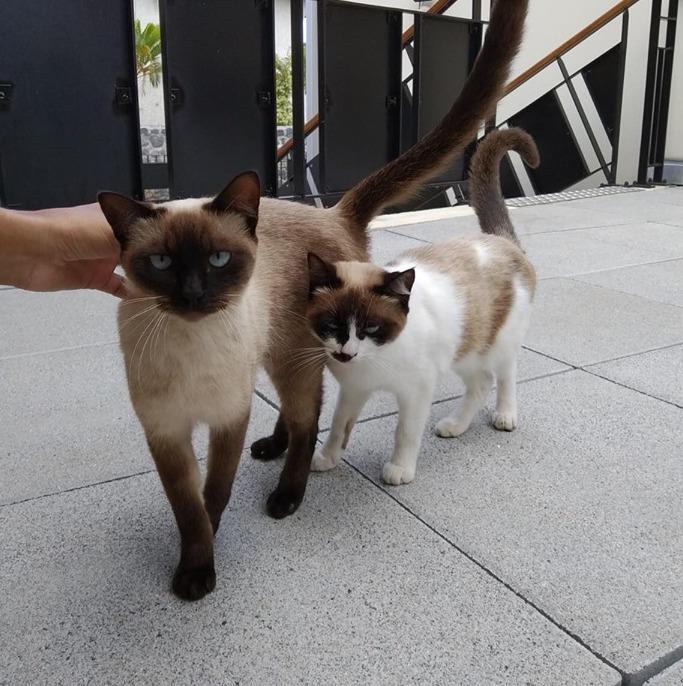 SOS pour ces deux magnifiques chats Sos_310