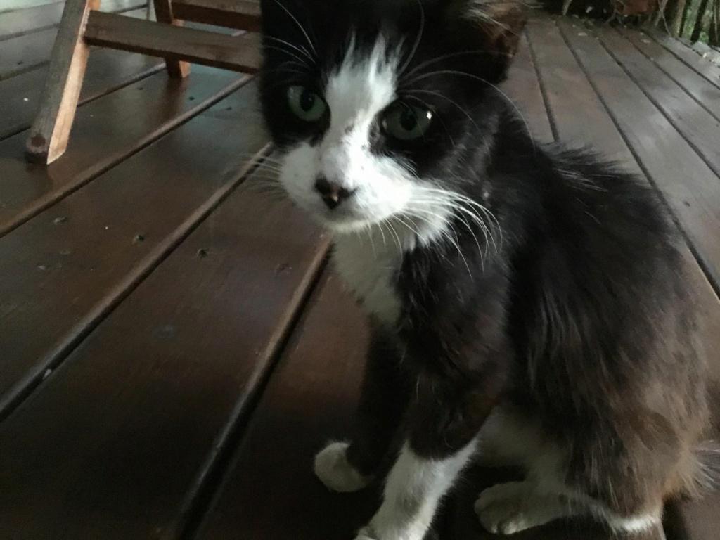 TAM, chatte femelle noire et blanche de 3 ans environ Tam_1310