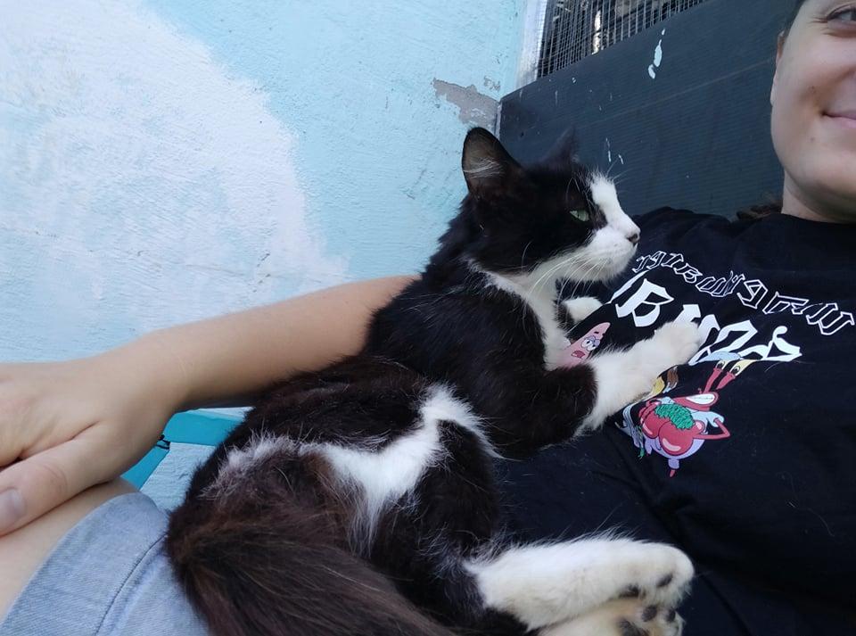 TAM, chatte femelle noire et blanche de 3 ans environ Tam_510
