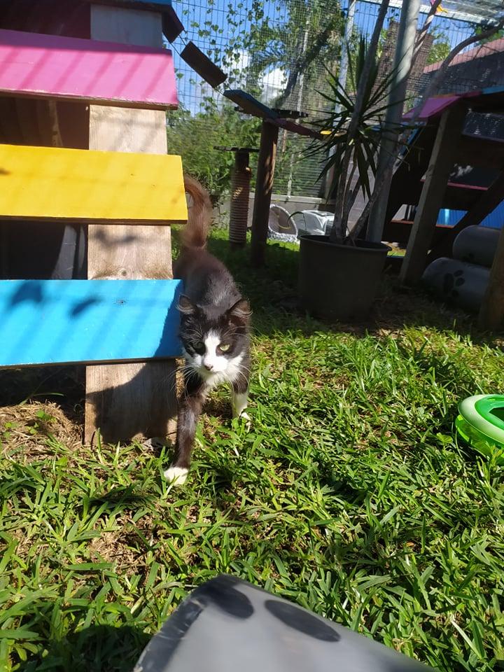 TAM, chatte femelle noire et blanche de 3 ans environ Tam_710