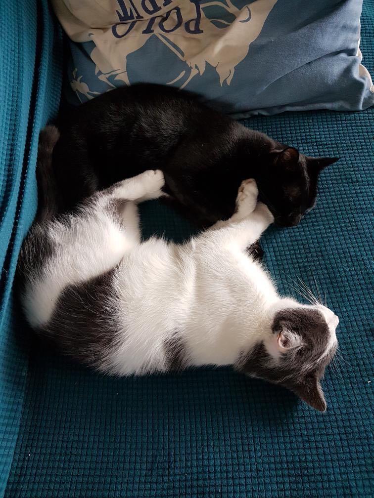 TANGO & MEEKO Tango_11