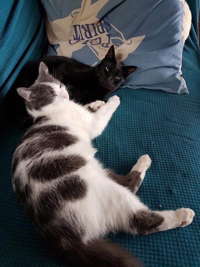 TANGO & MEEKO Tango_12