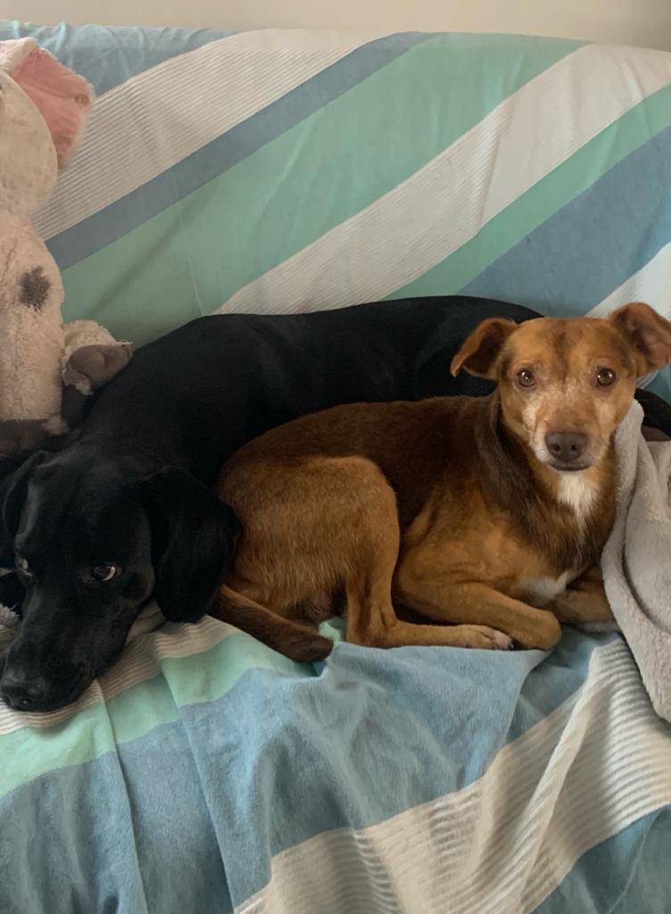 THOR, chien mâle de 4 ans - Marrainé par Muriel et Eugénia - Réservé  Thor3510