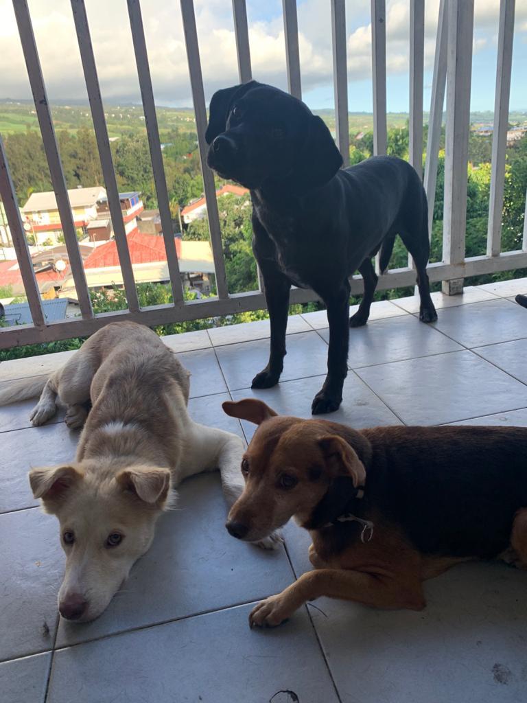 THOR, chien mâle de 4 ans - Marrainé par Muriel et Eugénia - Réservé  Thor6610