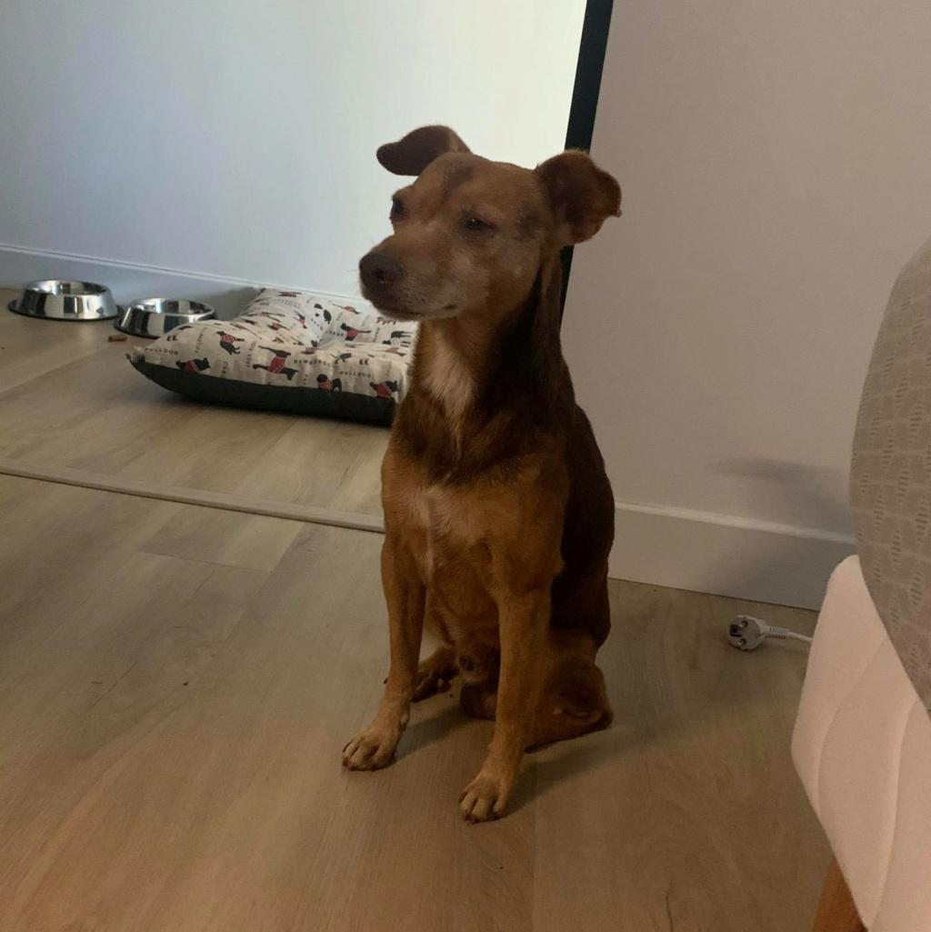 THOR, chien mâle de 4 ans - Marrainé par Muriel et Eugénia - Réservé  Thor_210